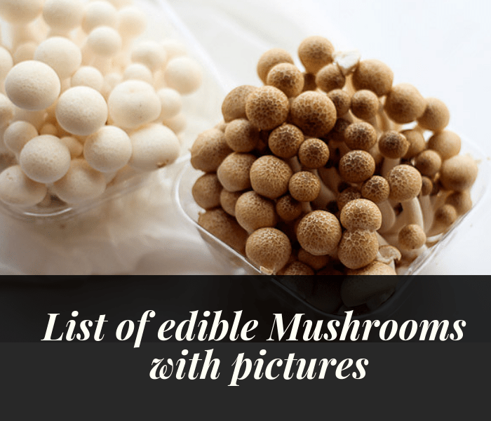 10 Delicious Edible Mushrooms with Pictures.