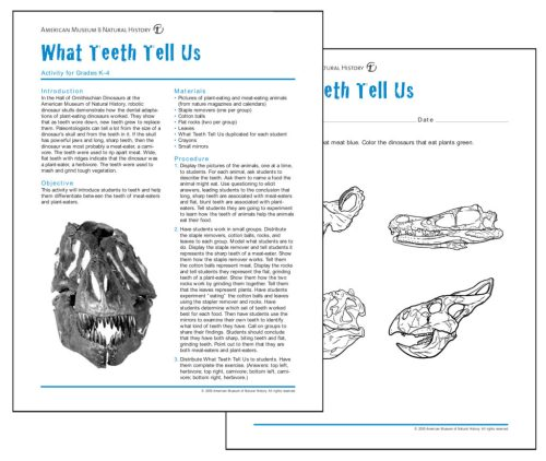small resolution of Fossils and Dinosaurs Lesson - Educational Innovations Blog