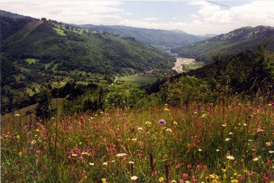 1361788-Blooming_Wildflowers_of_the_Carpathians-Carpathian_Mountains