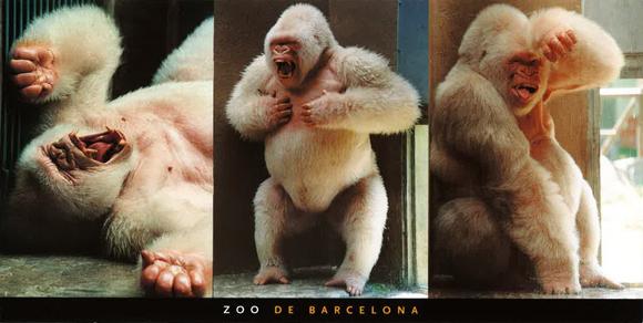 Snowflake Gorilla Baby