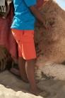 Noah the Dromedary