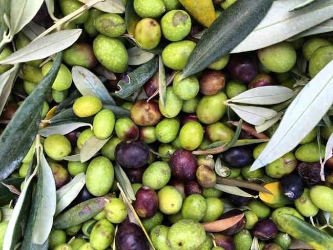 Olives in basket