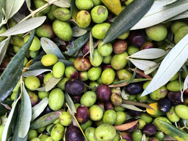 Olives in basket