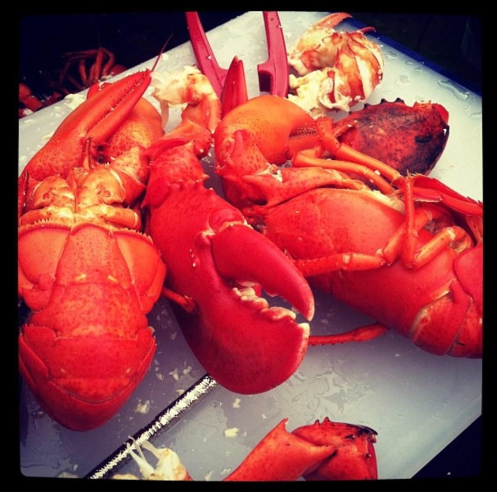 Lobster Camden Maine