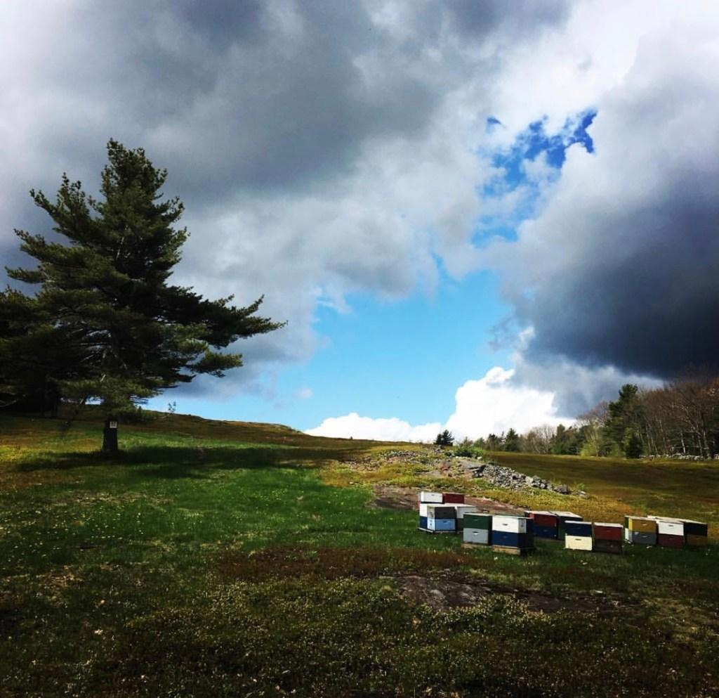 Blueberry Barren Camden Maine