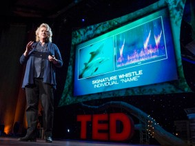 The language of dolphins: Denise Herzing at TED2013