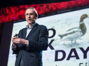 How a dead duck changed my life: Kees Moeliker at TED2013