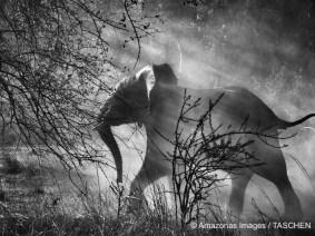 Sebastião Salgado: A gallery of spectacular photographs
