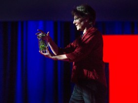 Lighting up the world of fireflies: Sara Lewis at TED2014