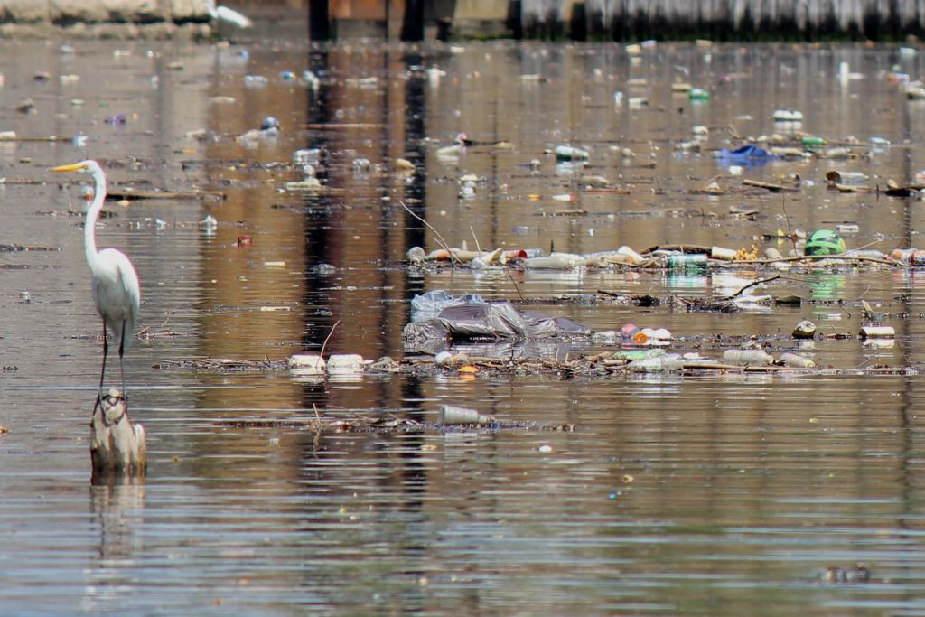 Bronx River filled with trash and a bird