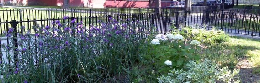 Rain garden at Bronx River Houses. Courtesy of NYC DEP.