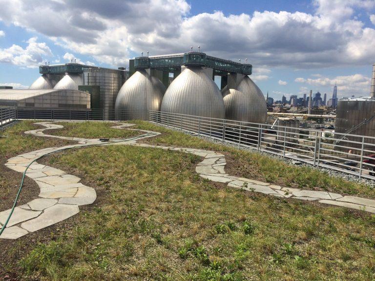 Kingsland Wildflowers, Newtown Creek Alliance's 24,000 sq. foot green roof
