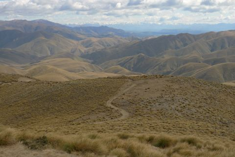 Our first collecting site was Mount Studholme, near Waimate. This view is to the northwest-ish, with the Southern Alps in the distance. Photo Leon Perrie. © Te Papa.