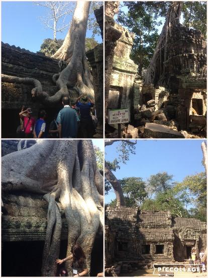 ガジュマルに覆われる、タ・プローム寺院。