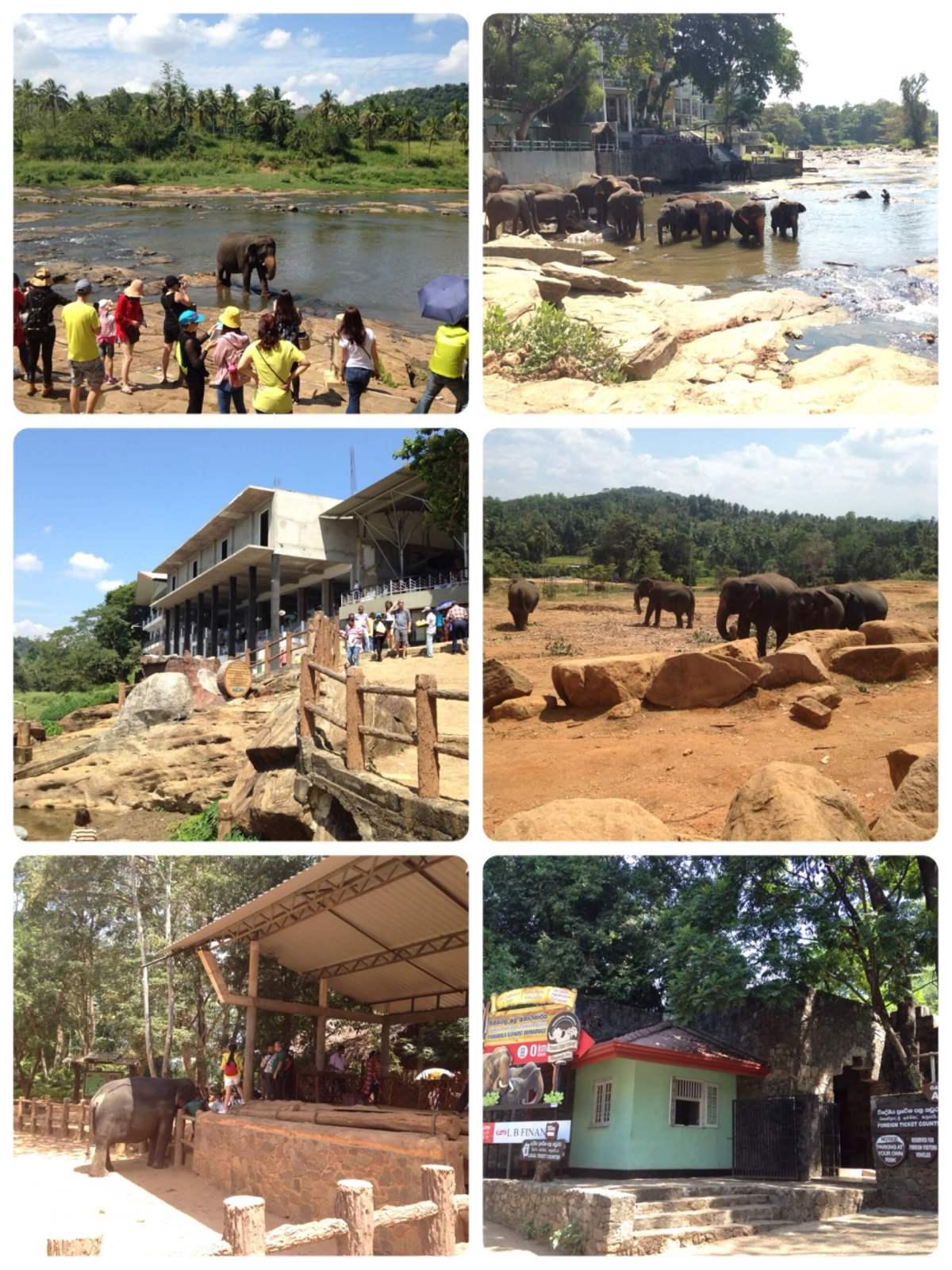 ゾウの孤児園