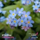3DAY_2017_Social_Holiday_ForgetMeNotDay_v1b