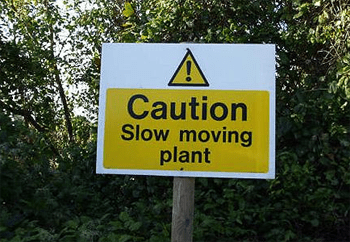 Slow Plant.png