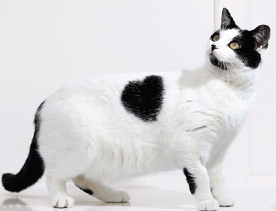 Bette The Cat With Heart