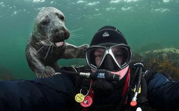 Cheeky Seal Pup