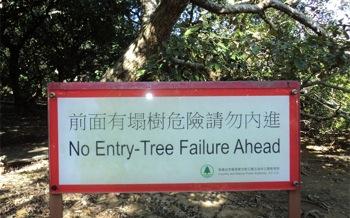 Tree Failure in Hong Kong