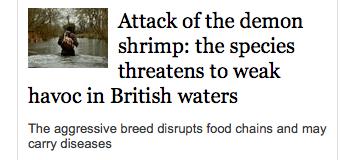 Weak Demon Shrimp