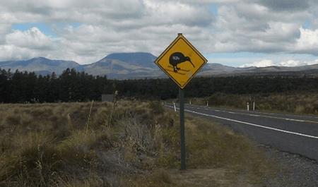 Isn t New Zealand Fun