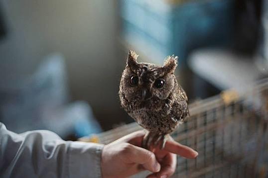 Buzzfeed Owl