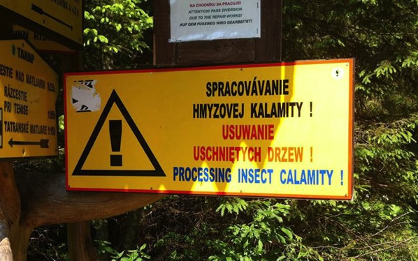 It s a sad time for Insects in Slovakia
