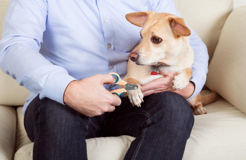 A man is seen trimming his dog's nails with Zen Clipper's safety pet nail clippers