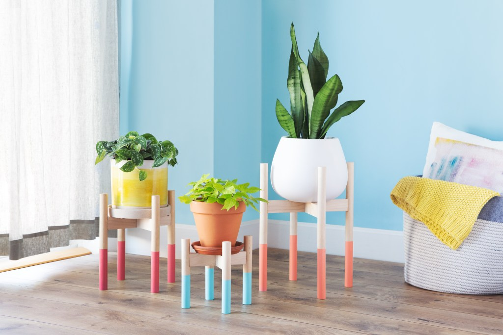 Three indoor plants sit in mid-century modern wooden plant stands from Hold On To Your Plants