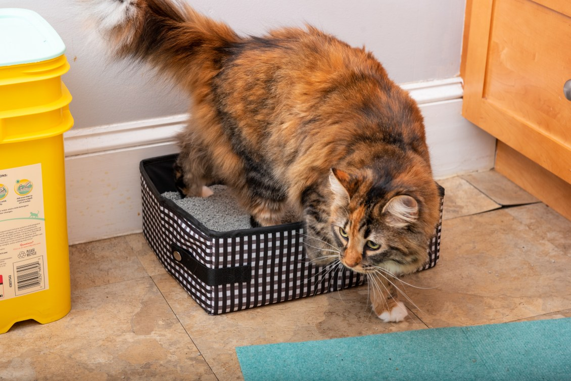 A Calico cat is seen stepping out of a black & white checkered portable litter box from Necoichi