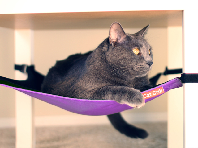 A gray cat is seen lounging in a purple cat hammock from Cat Crib