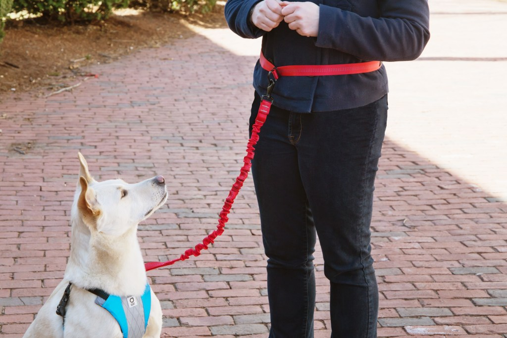 A person is seen walking their dog wearing a red Stunt Puppy runner's leash