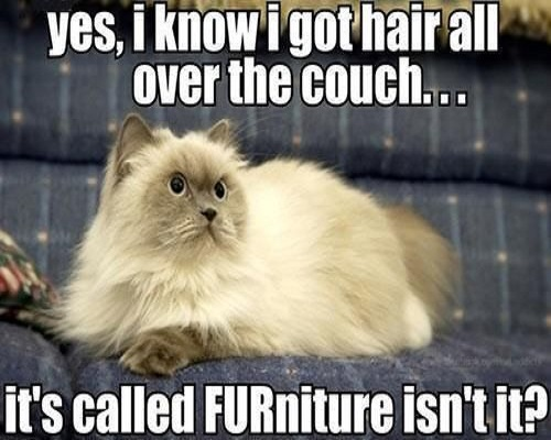 Furniture-Meme (1)
