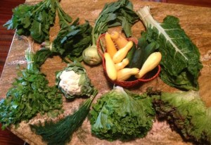 From left to right, starting at the top, mizuna, spinach, kohlrabi, yellow squash, cucumbers (from a friend's garden), Swiss chard, cilantro, cauliflower, dill, greenleaf lettuce, and redleaf lettuce. Yum!