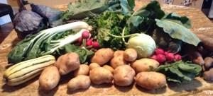 Clockwise from left: purple cabbage, purple kale, Nevada lettuce, kohlrabi, broccoli, sweet potatoes, radishes, potatoes, delicata squash, and bok choy.