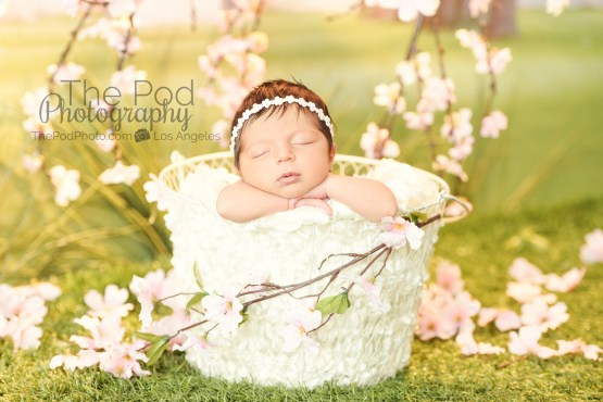 apple-blossom-baby-photography-set-best-photographer-los-angeles