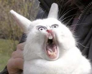 scary-rabbit-31