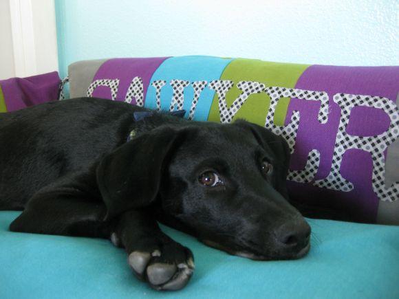 Pet bed 2