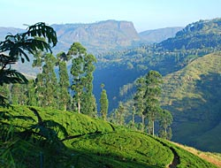 We visit a tea plantation and enjoy great views in the hill country.