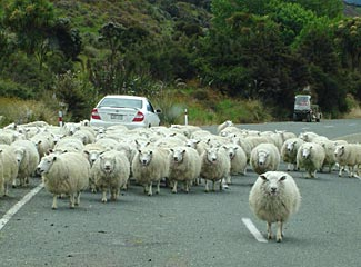 The concept of a 'traffic jam' has a different meaning in New Zealand.