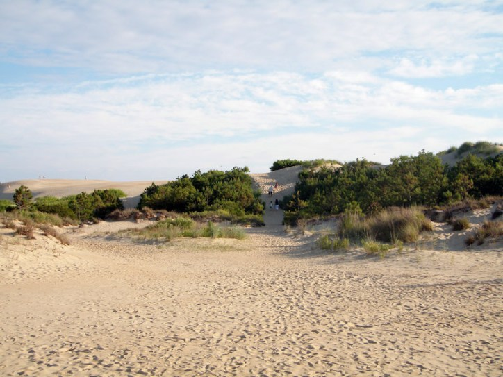 the jockey's ridge sand dunes in kitty hawk in north carolina