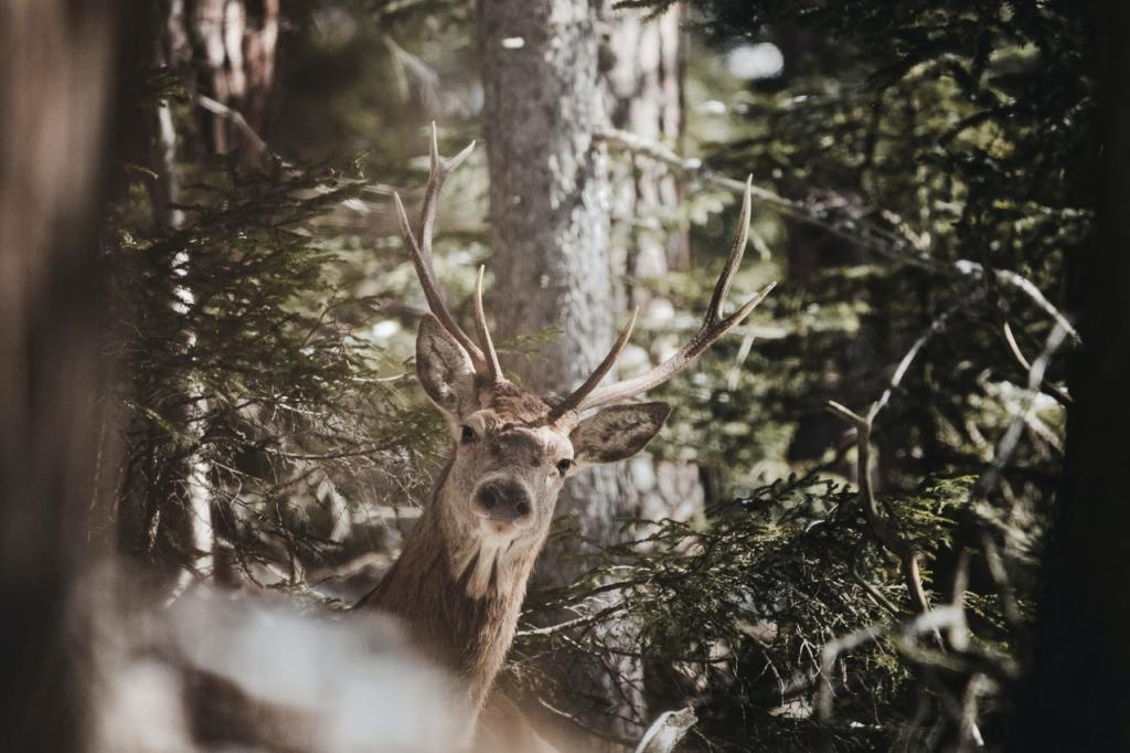 a reindeer looking through the trees