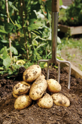 Potatoes - grow in bags to save space