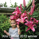 Photo competitions - Tree Lilies