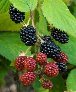 """Was Buying a House Called """"Brambles"""" an Omen? (Part Two)"""