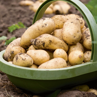 Celebrate National Chip Week - grow your own potatoes