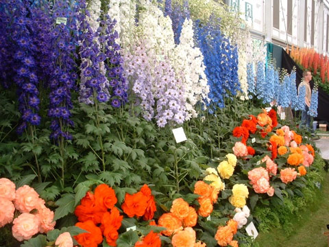 Chelsea Flower Show - the floral sweet shop