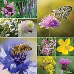 Win a wildflower collection - plants and seeds - worth over £40