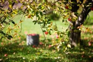 Gardening news - British Tomato Week, wildlife survey, ash dieback
